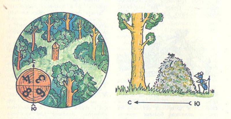 Иентироваться лесу незнакомом в